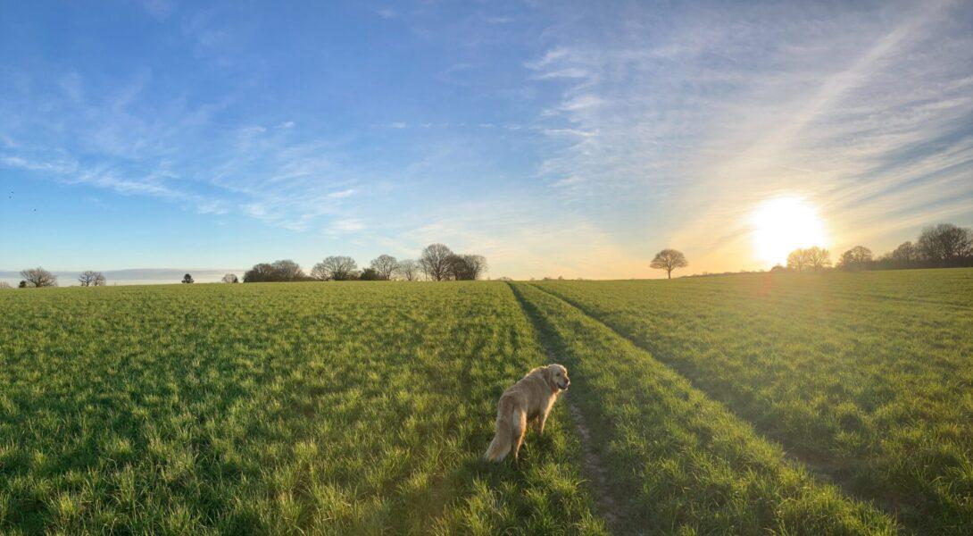 田舎暮らしの現実は、ストレスフリーで楽しく暮らせる